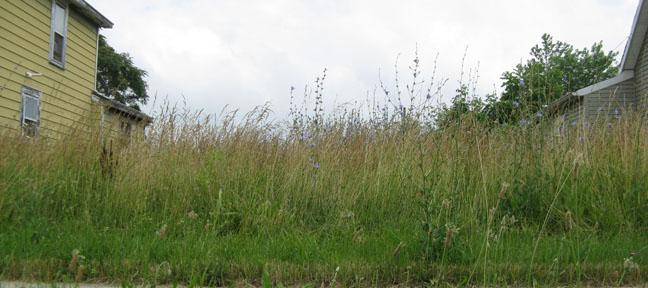 Seasonal Grass & Weed Program Underway